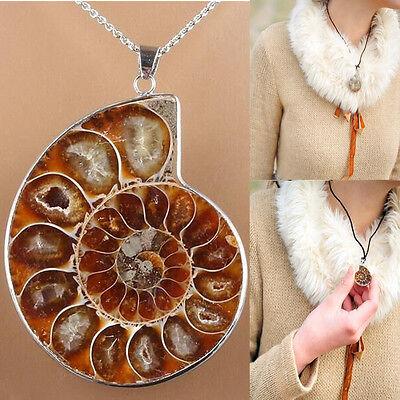 Madagaskar Sea Nautilus Ammonit Shell Kette Edelstein Anhänger für Halskette Neu