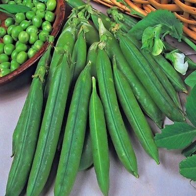 Vegetable Pea Meteor Appx 150 seeds First Early