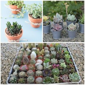 ISO: succulent plants/succulent plant clippings (will pay)
