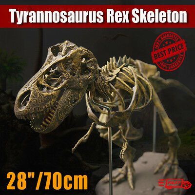 T-Rex Tyrannosaurus Rex Skeleton Dinosaur Animal Collector Model Decor Toy NEW - T Rex Model
