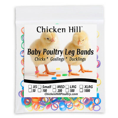 100 Chick Leg Bands 14 Size 4 Poultry Chickens Ducklings Light Geese Day Old