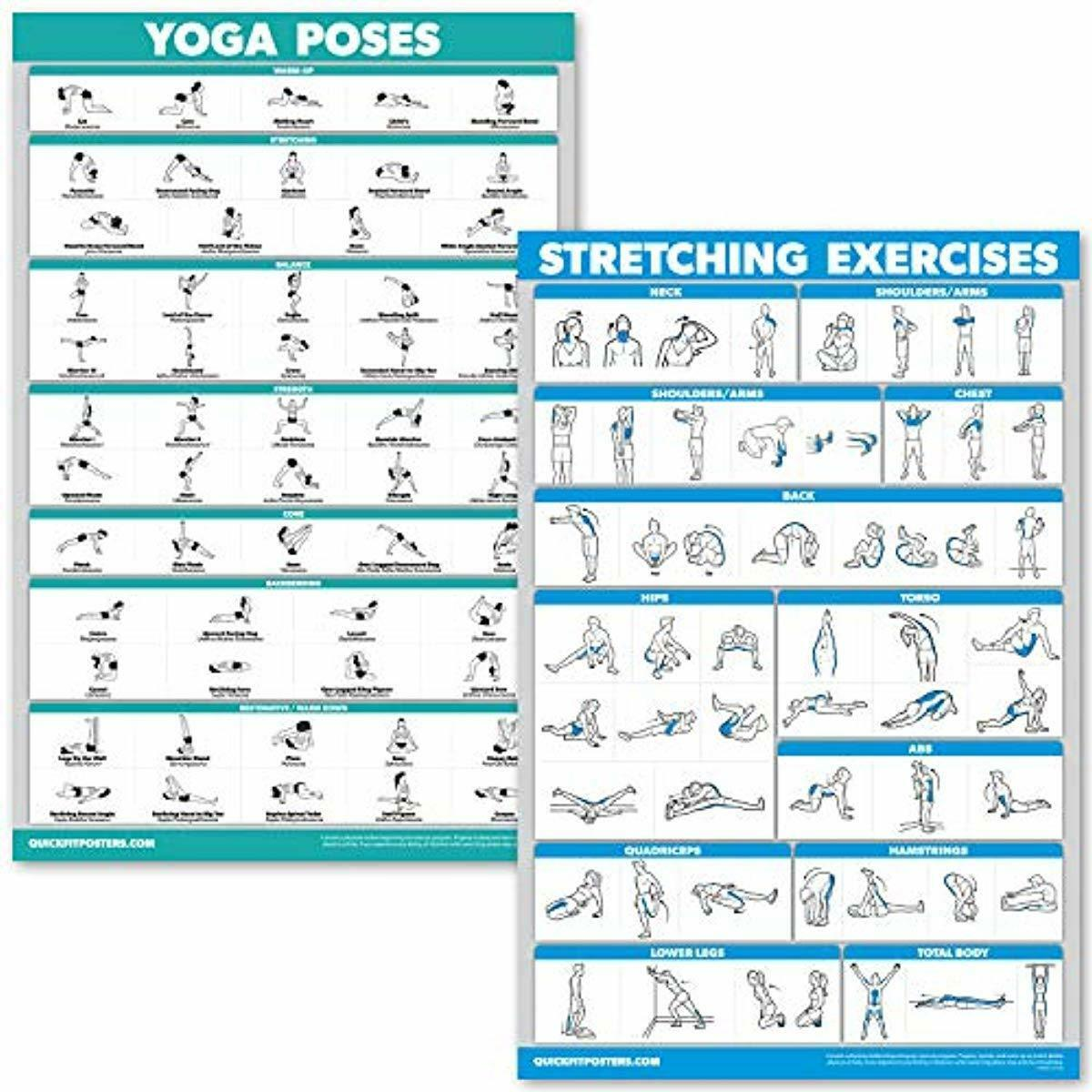 """QuickFit Yoga Poses and Muscular System Anatomical Poster 18/"""" x 27/"""" LAMINATED"""