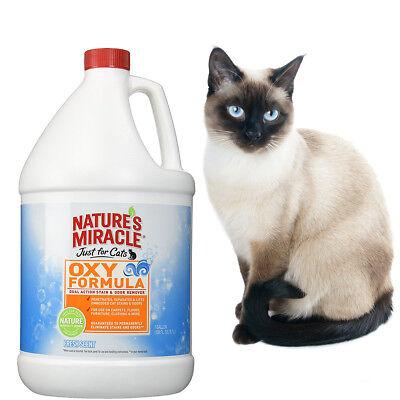 ציוד חתולים אחרים פשוט לקנות באיביי בעברית זיפי