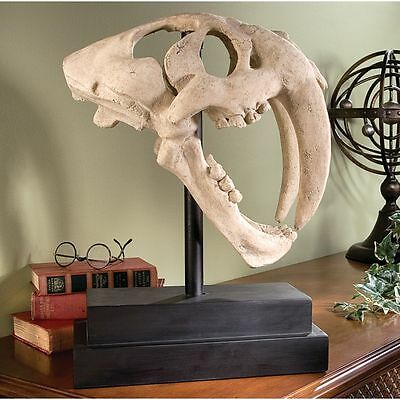 Saber Tooth Tiger Skull Fossil Predator Museum Mount for sale  Tampa