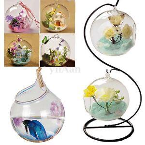 Suspendu hanging vase fleur plante verre boule hydroponique d cor maison mariage ebay - Boule verre suspendu ...