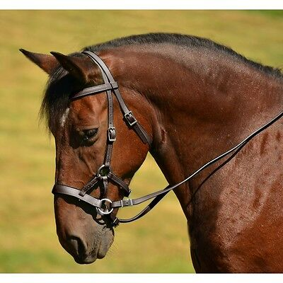 ENGLISH SADDLE HORSE GENUINE LEATHER BROWN NATURAL BITLESS BRIDLE SIDE PULL