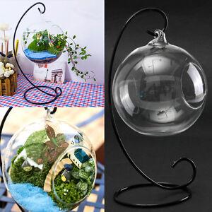 suspendu hanging vase plante verre boule hydroponique support mariage d cor ebay. Black Bedroom Furniture Sets. Home Design Ideas