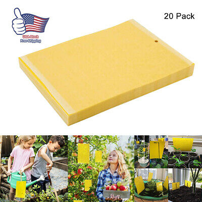 Traps Fruit Flies Insect Glue Catcher Set 50 Pcs Sticky Fly Trap Paper Yellow