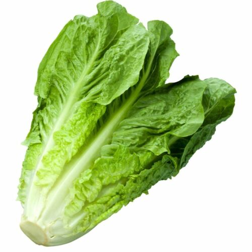 1200+ Romaine Lettuce Seeds | Non-GMO Vegetable Garden Seeds from USA Ships FREE
