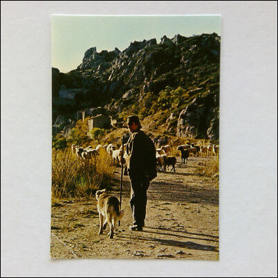 Pictures of Provence Postcard (P349)