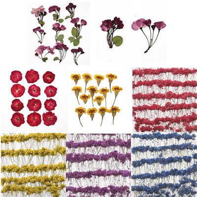 Dried Pressed Real Flowers (1 Pack Real Pressed Flower Dried Flowers for Arts Crafts Resin Jewelry Making )