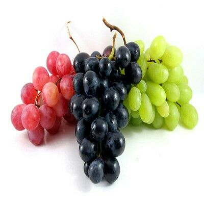 Grape Fragrance Oil Candle/Soap Making Supplies *Free Shipping -