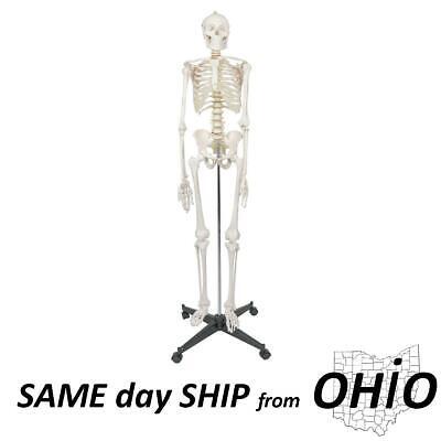 170cm Life Size Man Human Anatomical Anatomy Skeleton Medical Model With Stand