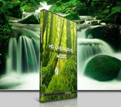 200 MOSS TREES NATURE DIGITAL PHOTOSHOP OVERLAYS BACKDROP BACKGROUND PHOTOGRAPHY