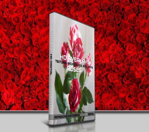 200 ROSES FLOWERS DIGITAL PHOTOSHOP OVERLAYS BACKDROPS BACKGROUNDS PHOTOGRAPHY
