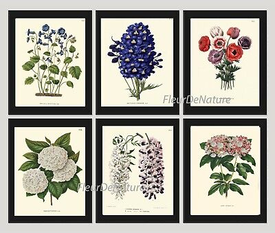 Unframed Botanical Print Set of 6 Antique Blue White Flowers Hydrangea Wall (Botanical Setting)