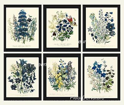 Botanical Print Set of 6 Prints Unframed Antique Blue Flowers Wildflowers (Botanical Setting)