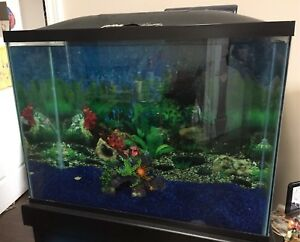Fish Aquarium with wooden stand
