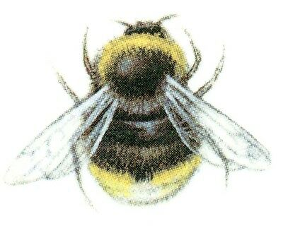 Black Yellow Bumble Bee - Black Yellow Bumblebee Bee Bees Select-A-Size Waterslide Ceramic Decals Bx