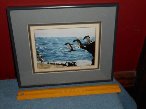 Original PENGUIN Photography Falkland Islands ROCKHOPPER Penguin Signed Framed