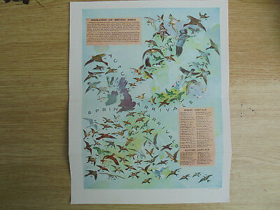 genuine vintage print of map showing the migration of british birds,