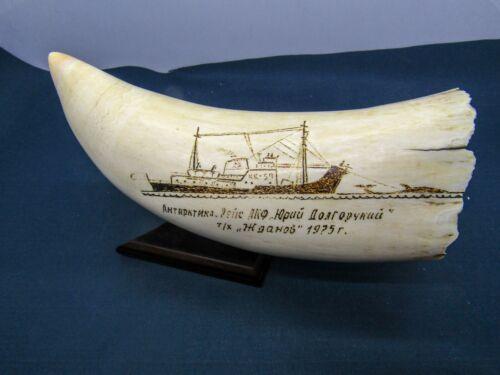 Sperm whale teeth on stand 455gr
