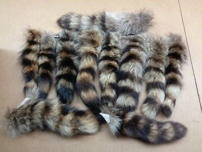 XL Tanned Raccoon Tail/Crafts/Real USA Fur Tail/Harley parts/Coon Tails/Cat (Parts Cat)