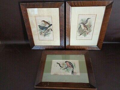 Set Of Three Framed Vintage Bird Prints By Wyman & Sons (#A2015) (Iii Framed Print Set)