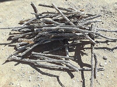 8 lbs of ORGANIC UNTREATED Cholla Cactus Wood