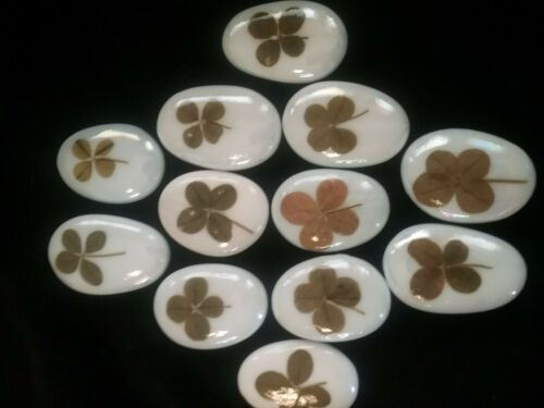 Lucky real 4 leaf clovers