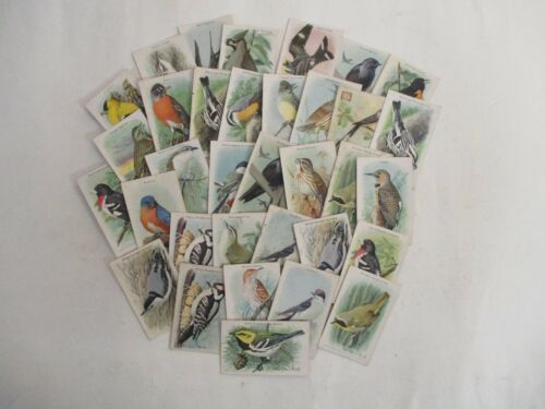 GROUP Arm and Hammer Bird Trading Cards 1920s 1930s