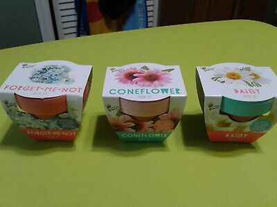Mini Plant Flower Pots great for kids](Mini Flower Pots Bulk)