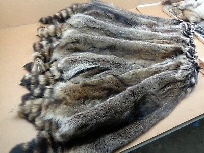 Professionally Tanned #1 XXXL Raccoon/Coon Hide/Furs/Pelts/Taxidermy/Crafts for sale  Fredericksburg
