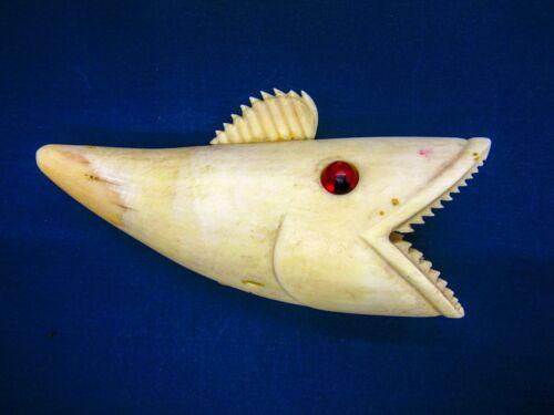 Sperm whale teeth 246 gr Killer fish