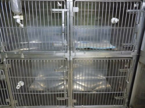 Stainless steel animal cages