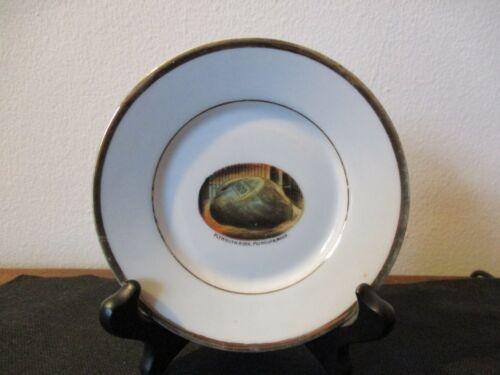 Circa 1915 Souvenir Porcelain Dish Plymouth Rock Plymouth Massachusetts
