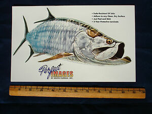 TARPON FISH DECAL STICKER DON RAY - REVERSE IMAGE ALSO AVAILABLE