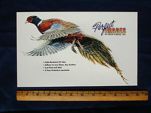 PHEASANT WILDLIFE BIRD HUNTING DECAL STICKER AL AGNEW
