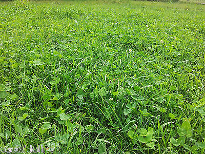 10 kg Schafweide mit Klee Weidemischung für Schafe Grassamen Weide Wiese Gras