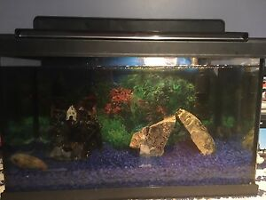 10 gallon fish tank- comes with everything