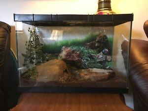 1.5 foot Ball Python