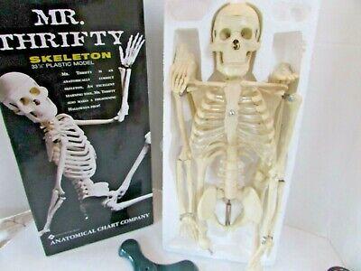 Mr.thrifty Skeleton 33.25 Anatomical Model Lippincott Diecast Stand Mib Lotd