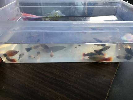 LOT OF MIXED PLATYS TIGER PANDA MICKEY MOUSE 10 IN TOTAL