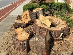 Firewood Cypress pine Alexander Heights Wanneroo Area Preview