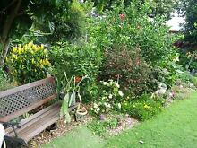****** PLANTS & PLANTS ****** Victoria Point Redland Area Preview