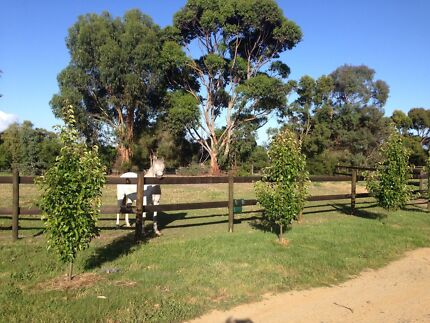 Horse agistment / holiday care corinella / bass / Phillip island