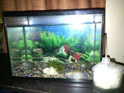 small fish tank Schofields Blacktown Area Preview