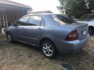CHEAP COROLLA!! Red Hill South Canberra Preview