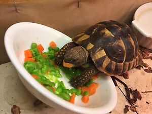 Cute 2 year old tortious