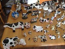Cow Collection Cunderdin Cunderdin Area Preview